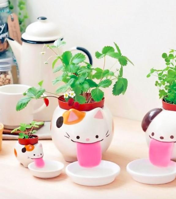 plante-a-faire-pousser-peropon-papa-chat