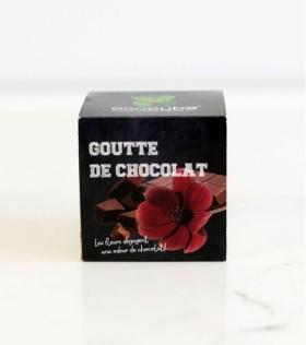 plante-a-faire-pousser-ecocube-cosmos-chocolat